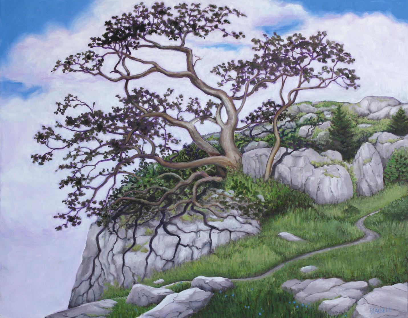 "GARY OAK/ a very ancient tree that survived the last ice age, is found in pockets of B.C., Vancouver Island, and Oregon/ Oil/ size 22"" x 28"""